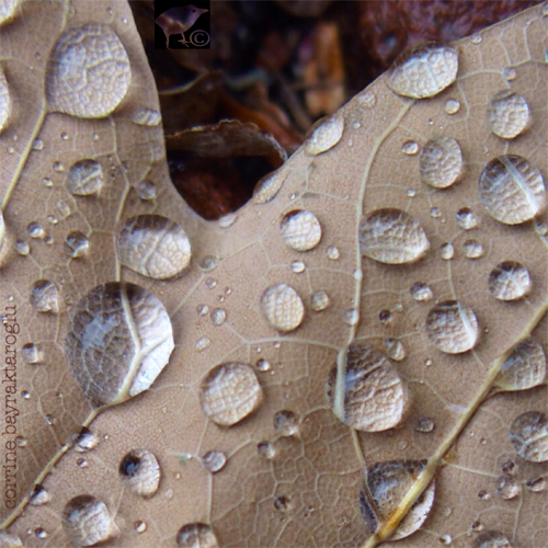 macro photography in autumn