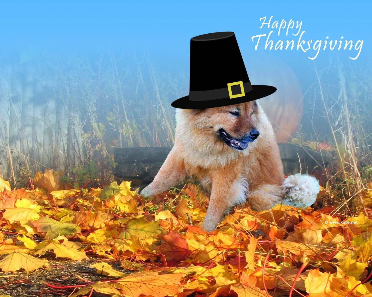 http://2.bp.blogspot.com/-oPjcge25u_Q/TxNpwkjxSLI/AAAAAAAAC78/aLOMsNWvPmk/s1600/Doggy+Say+Thanksgiving-wallpapers.d-bloggertemplate.com.jpg