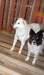 White e Palmira, in cerca di adozione, di coppia.