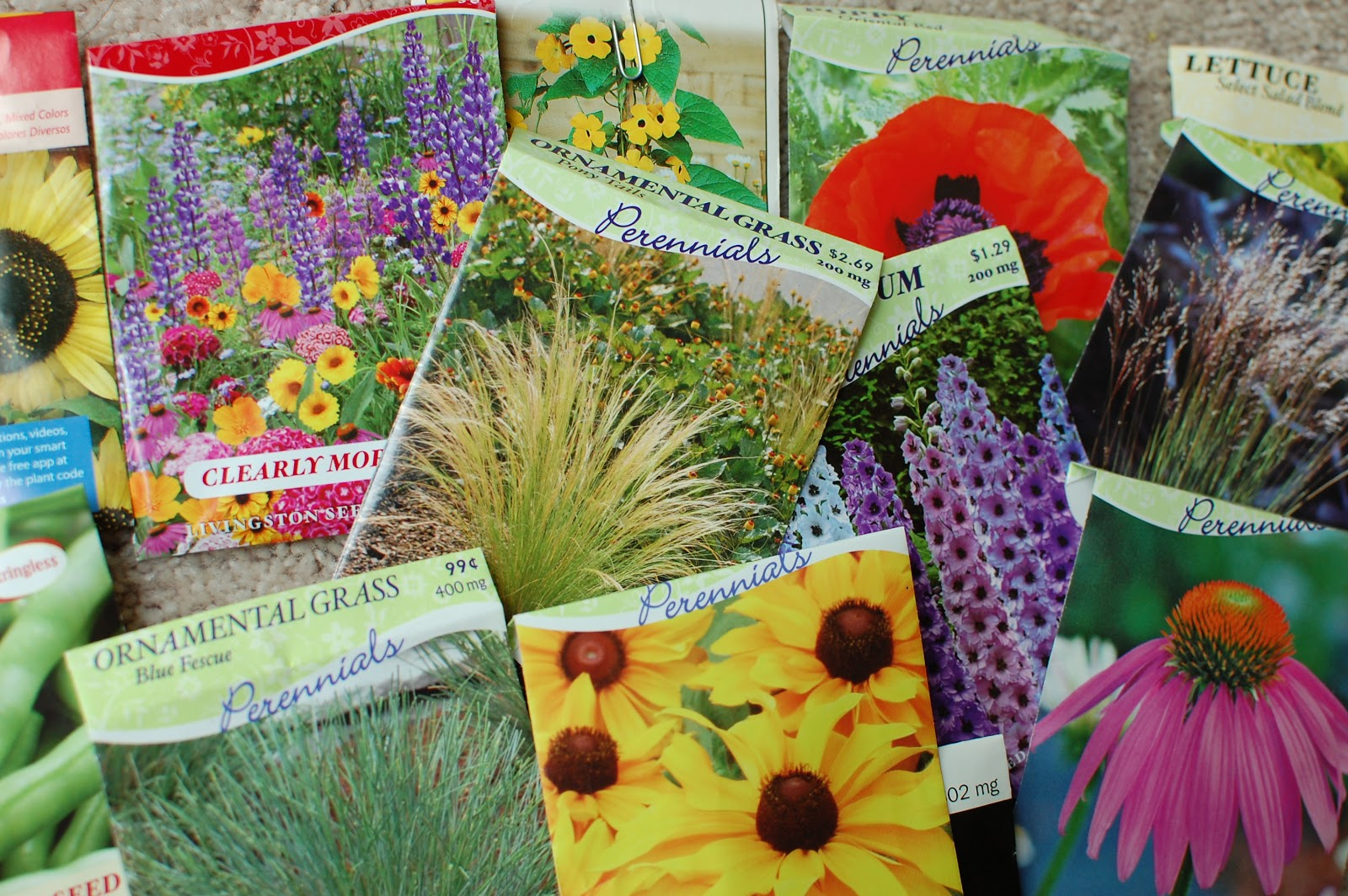 Sean And Katies Place Growing Perennials From Seed