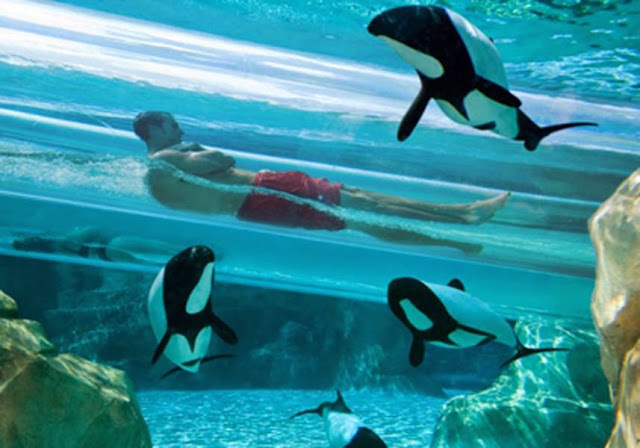 Aquatica Florida .Mejores parques acuáticos del mundo