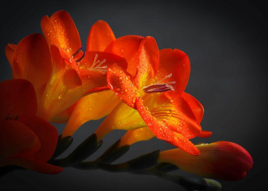 Bonito Flor De Naranjo Para Colorear Foto - Dibujos Para Colorear En ...