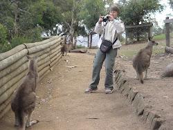 Fotografando Canguru - Austrália
