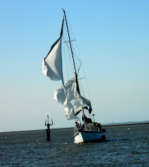Bringing in CELEBRATION with her blown jib, in very strong winds!