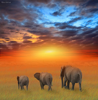 elephants walking towards the rising sun