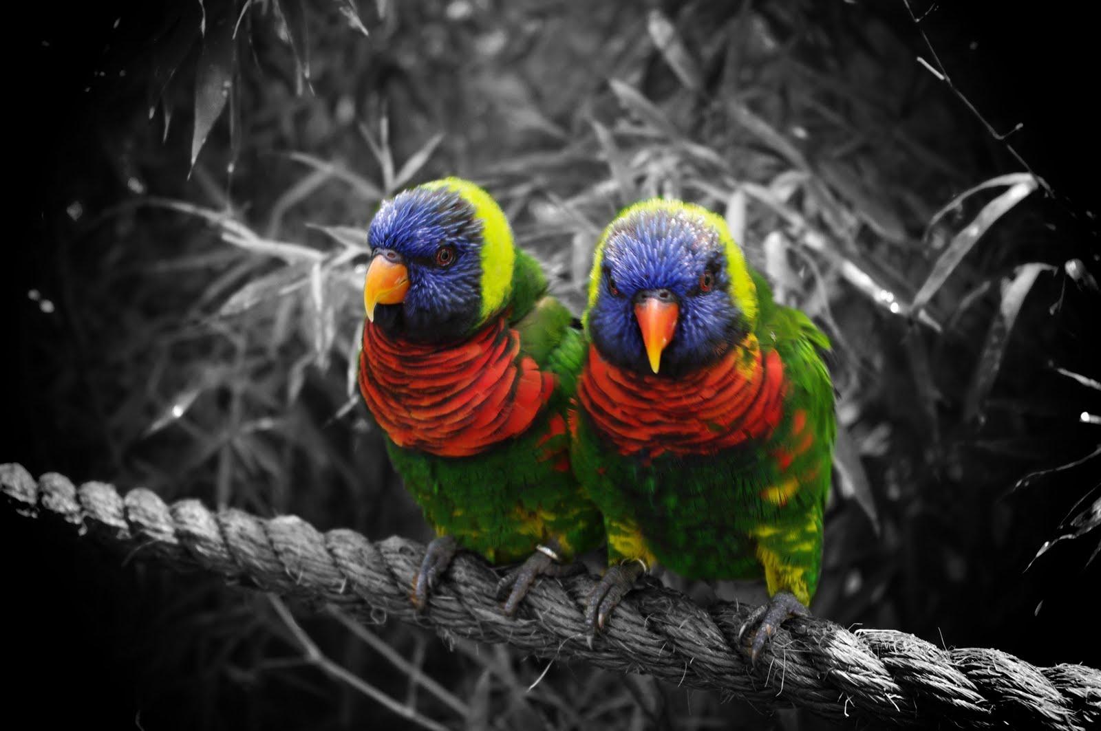 chrissy benton photography  color pop