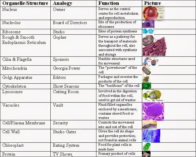 Nature analogies worksheet answers