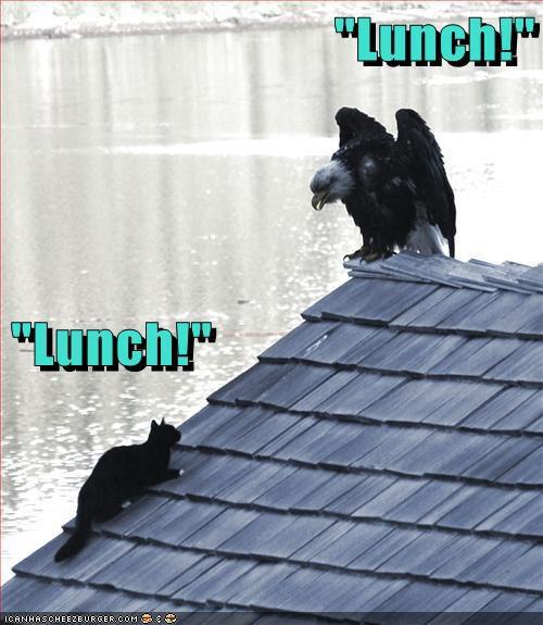 Cat And Dog Boop Meme