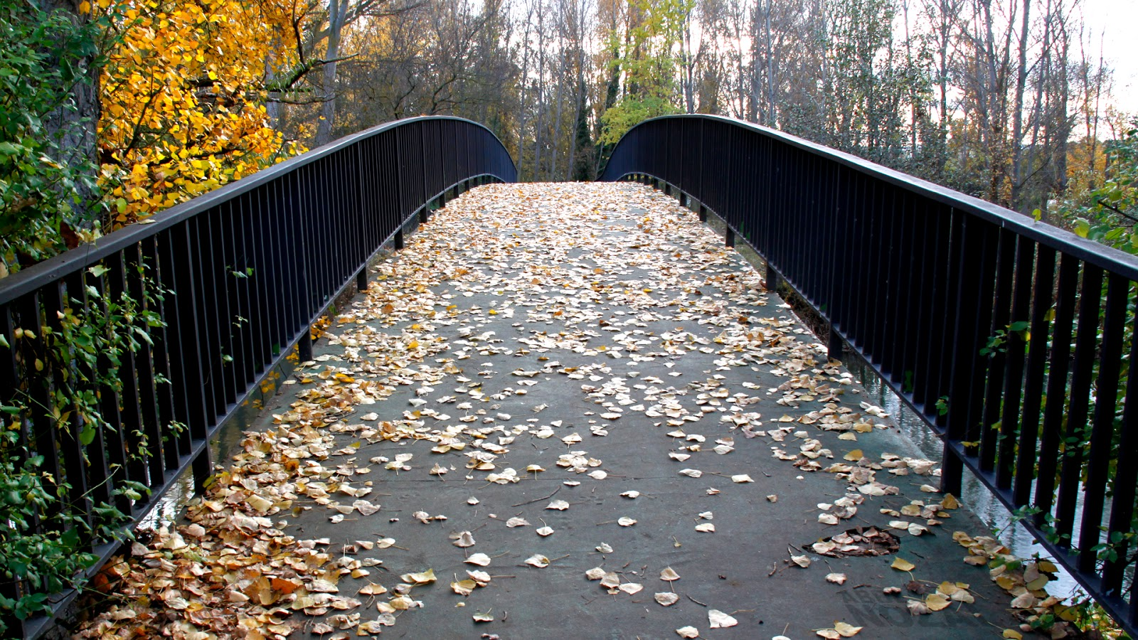 Puente al invierno, 2014 Abbé Nozal