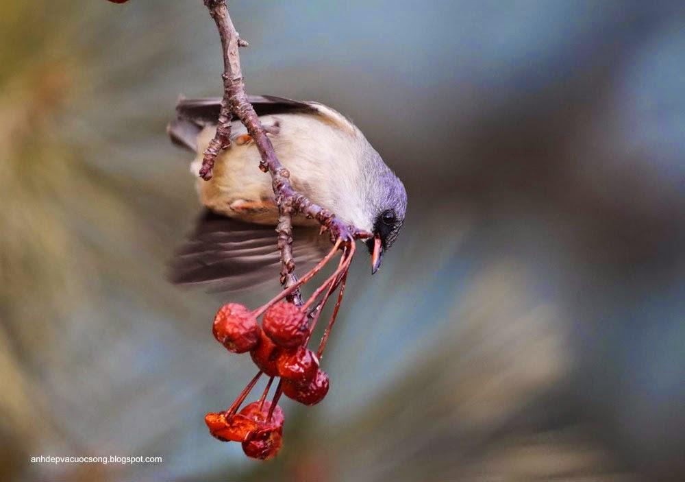 Ảnh động vật: Chú chim xinh đẹp 2 7