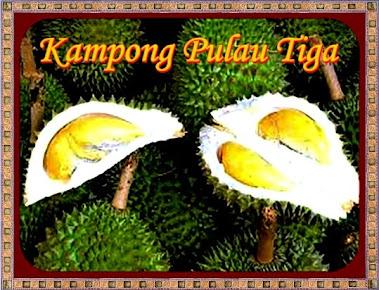 Durian Pulau Tiga