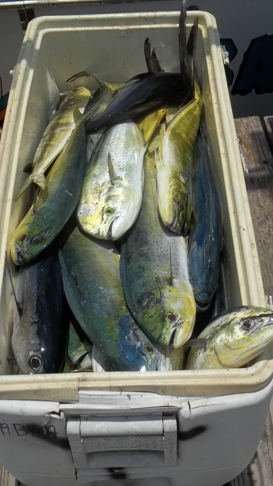 another limit of dolphin