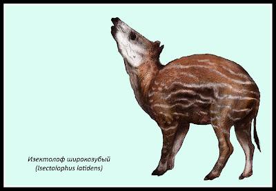 Isectolophidae