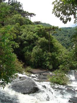 Foto: Taís Mariano - Serra Gaúcha
