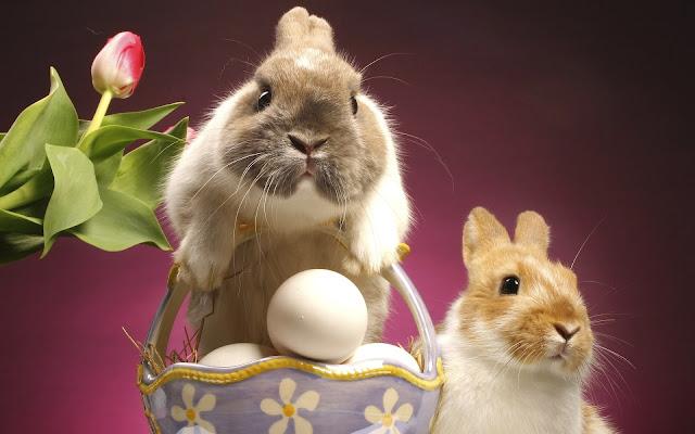 Best Jungle Life bunnies photos, bunny wallpaper