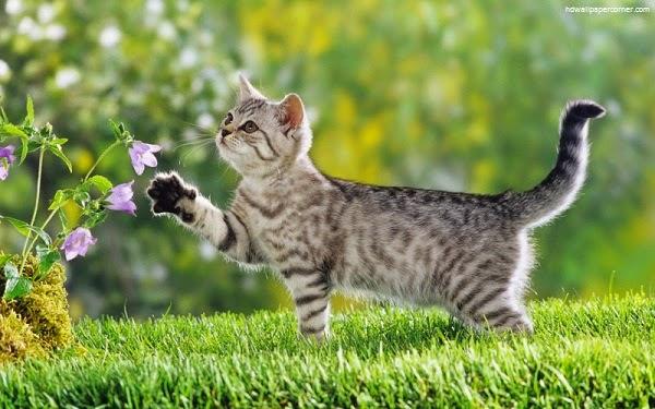 Belles images chats dans le jardin