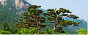 จองโรงแรม เมืองซกโช เกาหลีใต้
