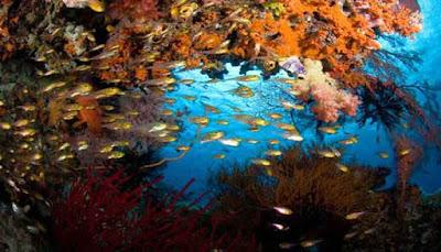 Kepulauan Raja Ampat, Papua Barat