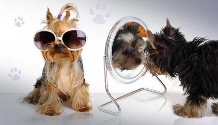 Bon plan toilettage et spa pour chiens paris woof mag - Salon toilettage chien ...