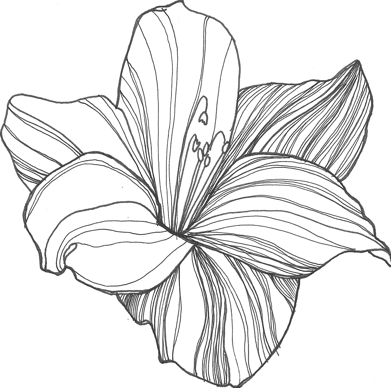 Line Drawing Flowers : Flower drawing pictures
