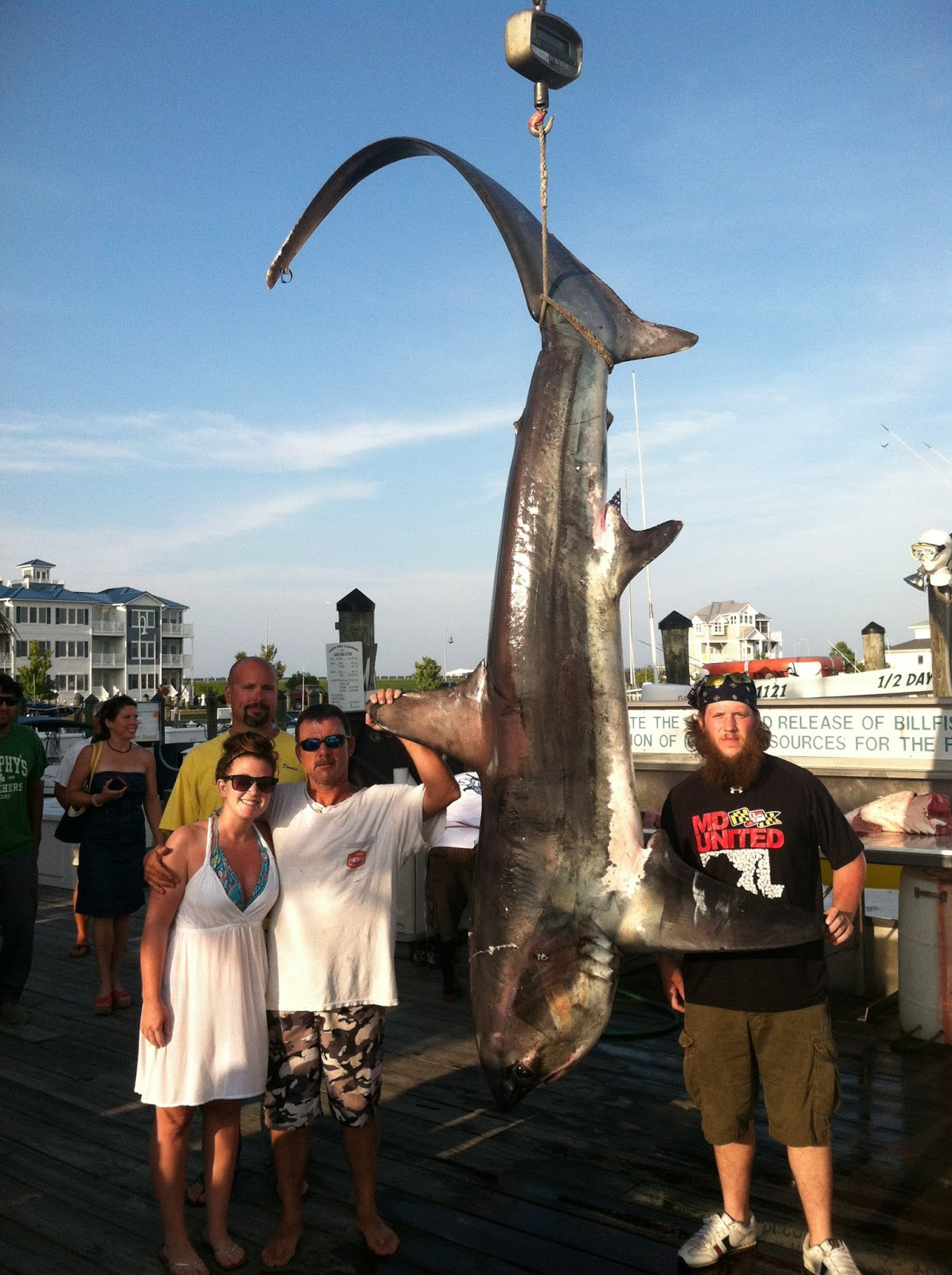 June 10 2013 shark daily reports news for Ocean city md fishing