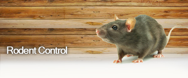rodent_control_pest_Doctor.jpg