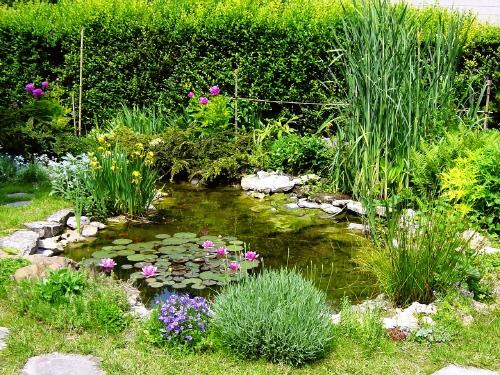 Pompage pourquoi pas un bassin dans mon jardin for Bassin eau jardin