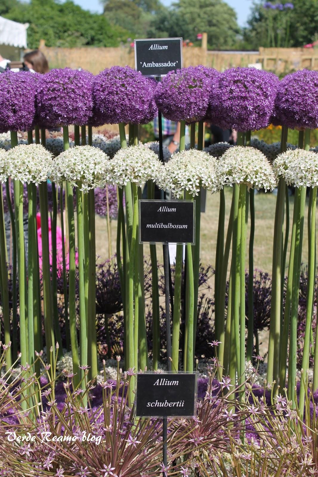 Le pi belle immagini di fiori - Composizione giardino ...