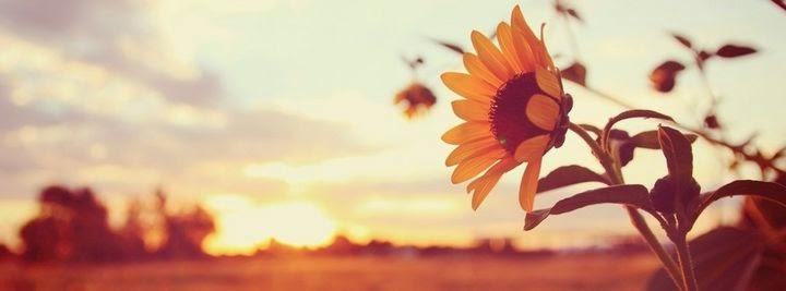صور غلاف فيس بوك زهرة وار الشمس