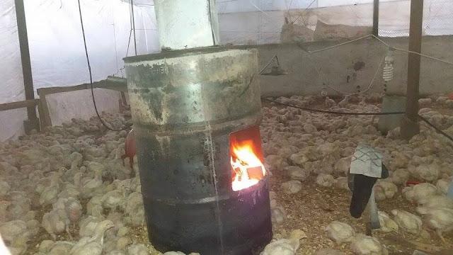 kayu baka dan kardus alternatif terakhir menghangatkan hewan ternak di gaza