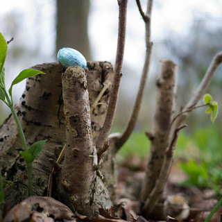 Easter Egg Hunt #1, © Graham Dew 2012