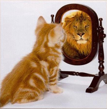 El lenguaje corporal del gato LionMirror