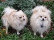 My 2 fur babies