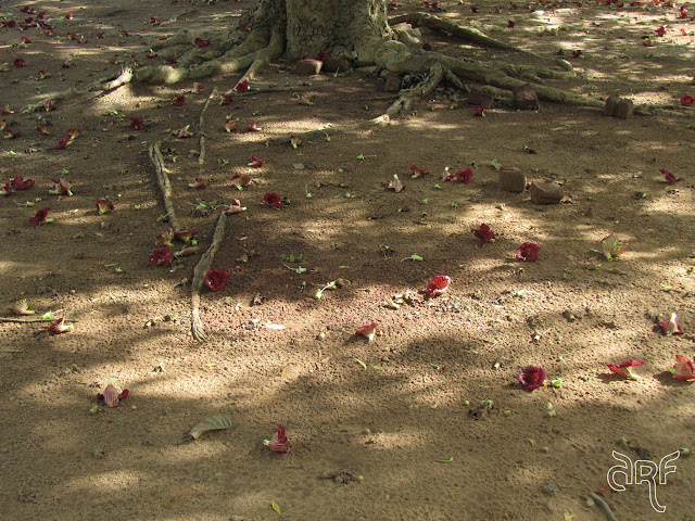 flowers fallen from a tree