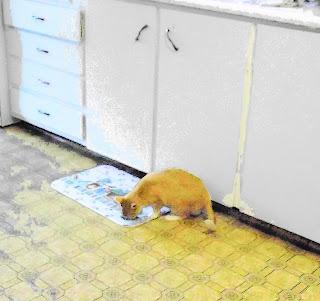 Orange cat treat time