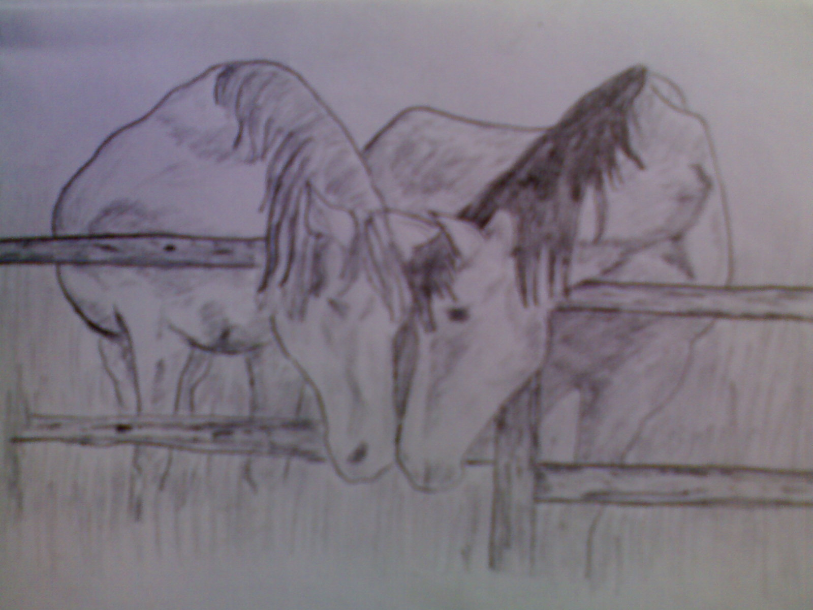 Sketch of horse head drawing of a horse