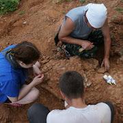 Кировские палеонтологи за неделю нашли пять скелетов древних животных