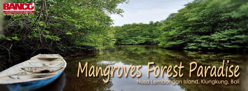 NUSA LEMBONGAN MANGROVE TOUR, KLUNGKUNG, BALI