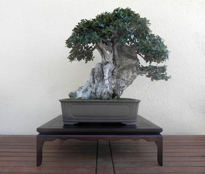 Mis bonsais y mis aficiones mesa para otro ullastre - Mesas para bonsai ...