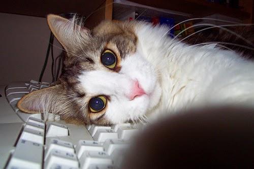 Cat Typing Detector