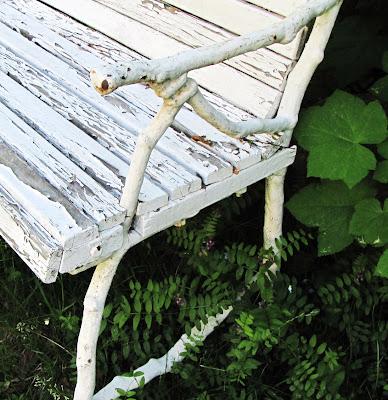 buxbom svamp sjukdom förfall sittplats