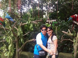 Singapore Zoo Parrots