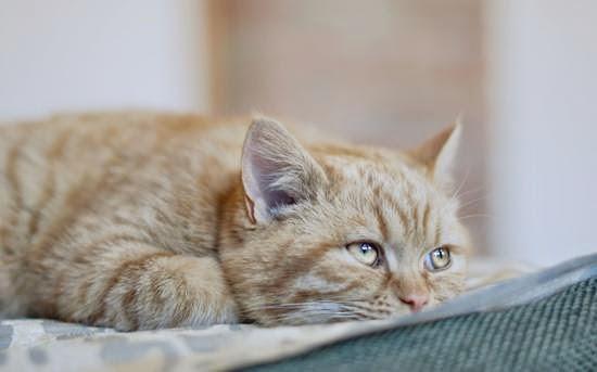 Как определить, что кошка больна?