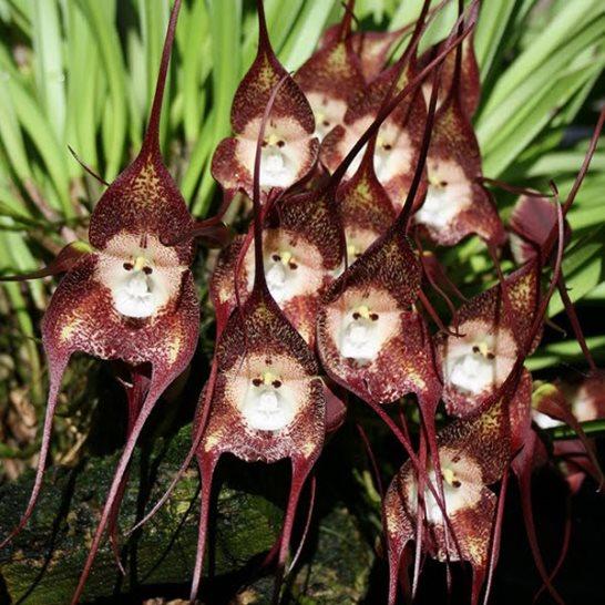 Extrañas especies de Orquídeas