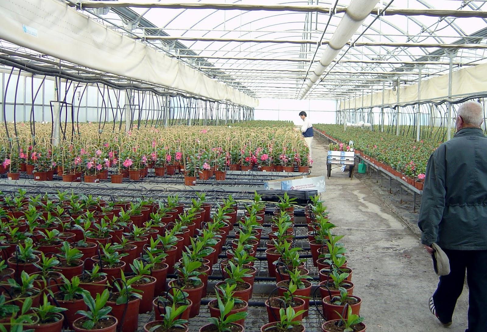 Thm tecnolog as de la horticultura mediterr nea control for Viveros y plantas