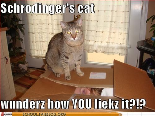 ... Crafts & Pretty Things Blog: Cat Thursday - Schrödinger's Cat again