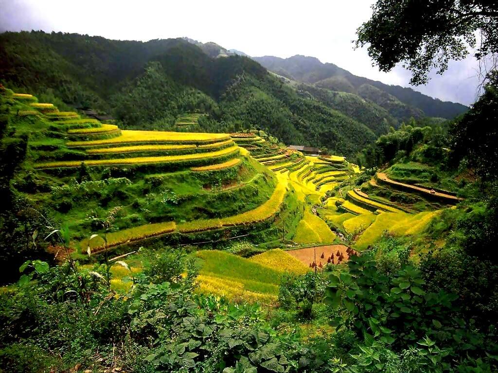http://2.bp.blogspot.com/-oY9ul12ofQc/USzQvDShd6I/AAAAAAAAJL8/9N95pvws0ko/s1600/Natural+Rice+Village+HD+Wallpaper.jpg