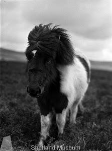 Pony 1930's