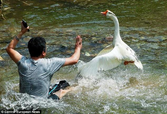 السائح يحاول النجاة و الخروج من الماء