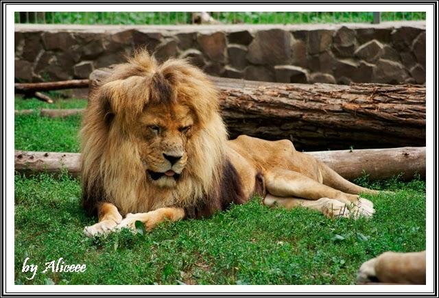 zoo-Nyiregyhaza-lei